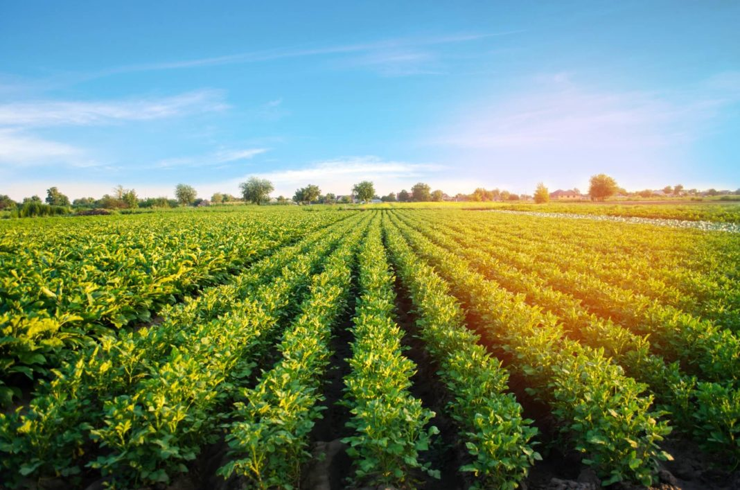 ecological agriculture organic food from eco-friendly farm