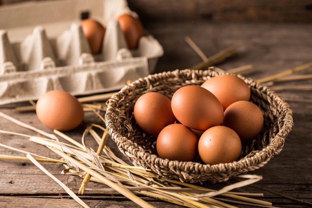 free range eggs - organic eggs