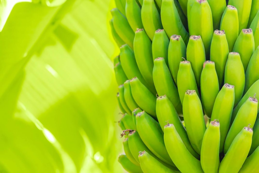 organic bananas palm three - fresh eco food