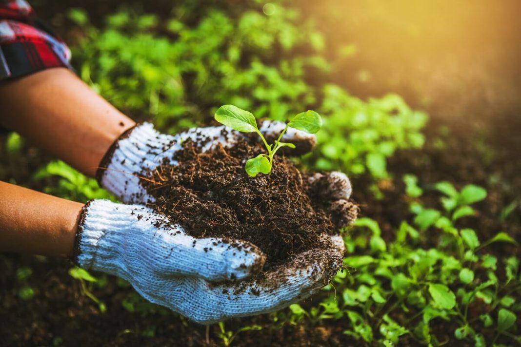 organic farming vs ecological farming differences
